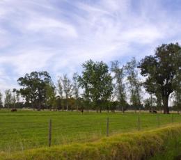 Vantage Land | Roseland